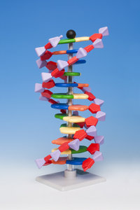12-layer DNA model - Molymod